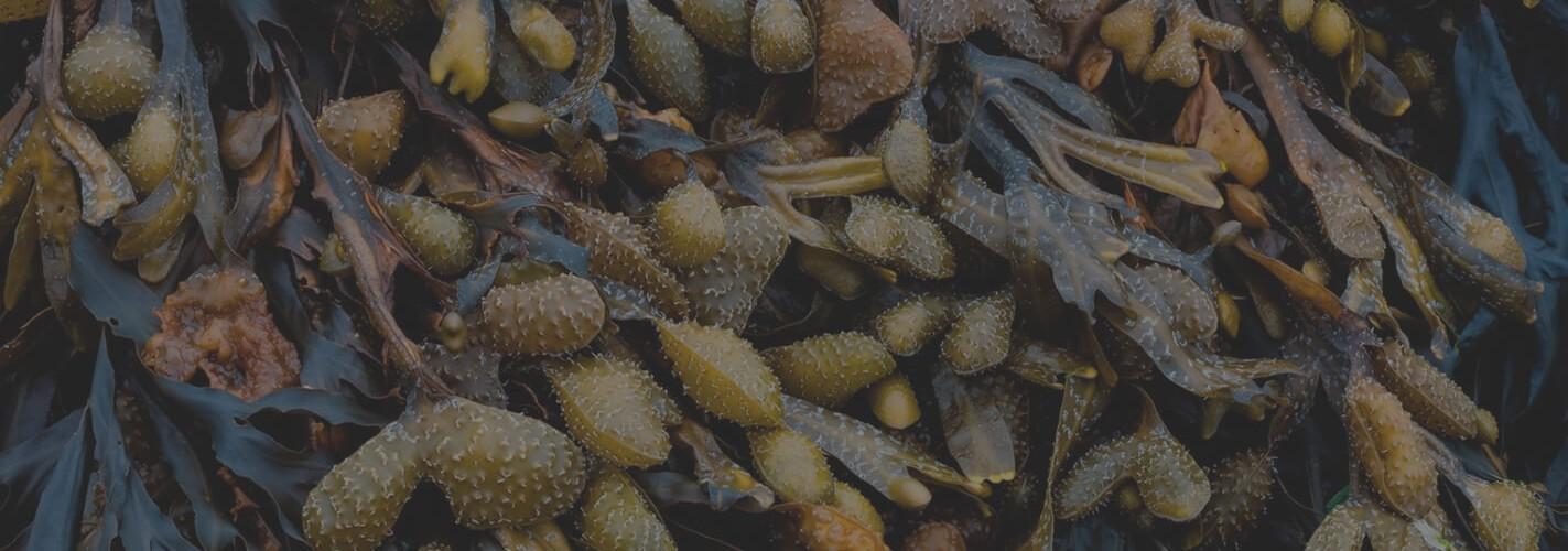 натуральная косметика из водорослей